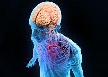 Szív- és agyi-érrendszeri felmérés Magnetspace testelemző készülékkel