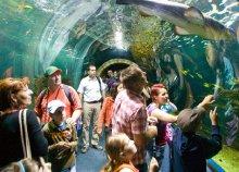Állatkerti látogatás vagy fürdőzés Nyíregyházán