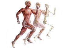 Funkcionális anatómia tanfolyam