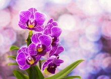 Látogatás a dobronaki Orchideafarmra