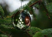 Karácsonyi vásár az erdő közepén