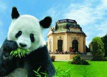 Buszos utazás 1 főre Bécsbe, a Schönbrunni kastélyhoz és az állatkerthez