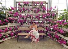 Buszos utazás 1 főre a dobronaki orchidea farmra és az Energia Parkba, magyar nyelvű idegenvezetéssel