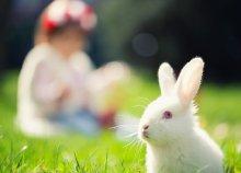 4 vagy 5 nap húsvéti wellness 2 főre a herceghalmi ABACUS**** Hotelben, teljes ellátással, gyerekprogramokkal