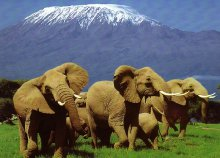 Körutazás Kenyában és Zanzibáron tengerparti pihenéssel, reggelivel, idegenvezetéssel