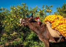 4 napos kirándulás Bosznia-Hercegovinában, a neretvai mandarinszüret idején, buszos utazással