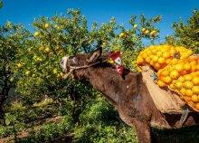 5 napos kirándulás Boszniában és Horvátországban a mandarin- és gránátalmaszüret idején
