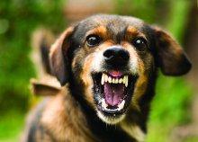 Online kutyaviselkedés kiképző tanfolyam az International Open Academy jóvoltából!