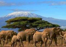 13 napos szafari Tanzániában zanzibári pihenéssel, repülőjeggyel, illetékkel, programokkal