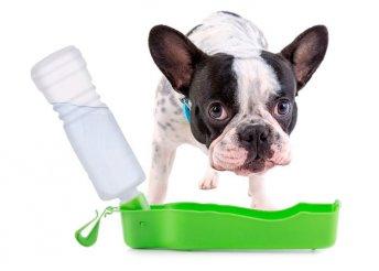 Pet Prior hordozható itató palack háziállatoknak