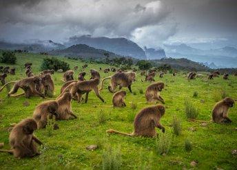 16 nap Etiópiában és a Seychelle-szigeteken, repülőjeggyel, teljes ellátással/félpanzióval, idegenvezetéssel