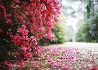 1 napos buszos utazás a Jeli Arborétumba a rododendronok virágzásának idején és látogatás Körmendre