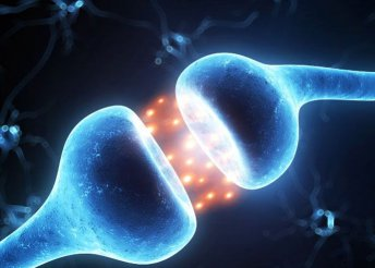 A hormonok állapotfelmérése Magnetspace készülékkel és 2 db frekvenciaterápiás kezelés