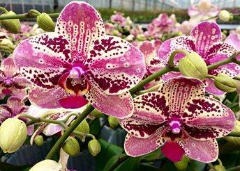 1 napos buszos utazás Szlovéniába, a dobronaki orchideafarmra, a lendvai várhoz és az Energia Parkhoz