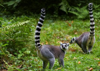 Kirándulás Madagaszkár északi részén, 12 nap 3-4*-os szállodákban félpanzióval