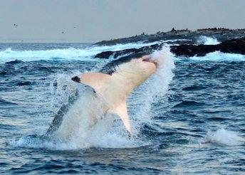 12 nap kaland Dél-Afrikában merüléses cápalessel, 4*-os szállással, félpanzióval