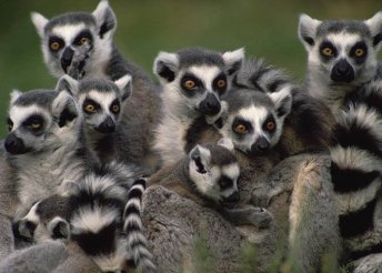 Körutazás Madagaszkáron, 12 nap 3-4*-os szállodákban és lodge-okban félpanzióval