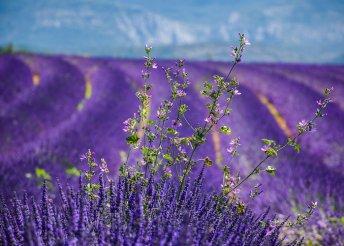 Kirándulás Provence-be és a francia riviérára, buszos utazással, reggelivel, idegenvezetéssel