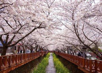 Körutazás a cseresznyevirágzás idején Dél-Koreában, 3-4*-os szállásokkal, reggelivel, idegenvezetéssel