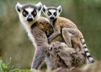 Körutazás Madagaszkáron és vakáció Mauritiuson, szállások 3-4*-os szállodákban és helyi lodge-okban