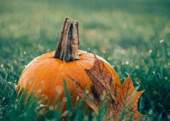 Halloween 2 főre Sokorópátkán, a Pannonhalmi Tájvédelmi Körzet mellett, félpanzióval