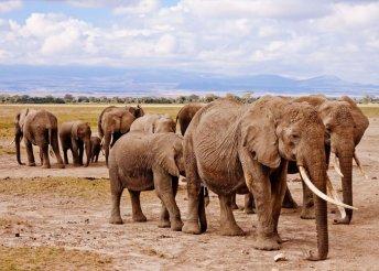 14 napos szafari kaland Kenyában, repülőjeggyel, illetékkel, teljes ellátással, programokkal