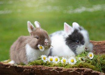 4 vagy 5 napos húsvéti wellness 2 főre Hévízen, a Főnix Club Hotelben, félpanzióval, húsvéti kosárral