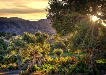 5 napos gasztronómiai kaland az olasz Puglia tartományban, repülőjeggyel, illetékkel, félpanzióval