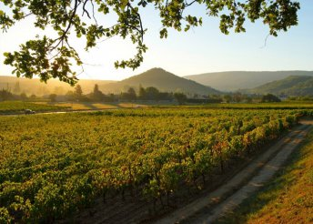 5 napos gasztronómiai élmény Provence-ben, repülőjeggyel, illetékkel, reggelivel, 3 ebéddel