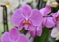 1 napos buszos utazás a szlovéniai Orchideafarmra, bőséges ebéddel és idegenvezetéssel
