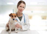 Állatorvos asszisztens az Internetional Open Academy jóvoltából